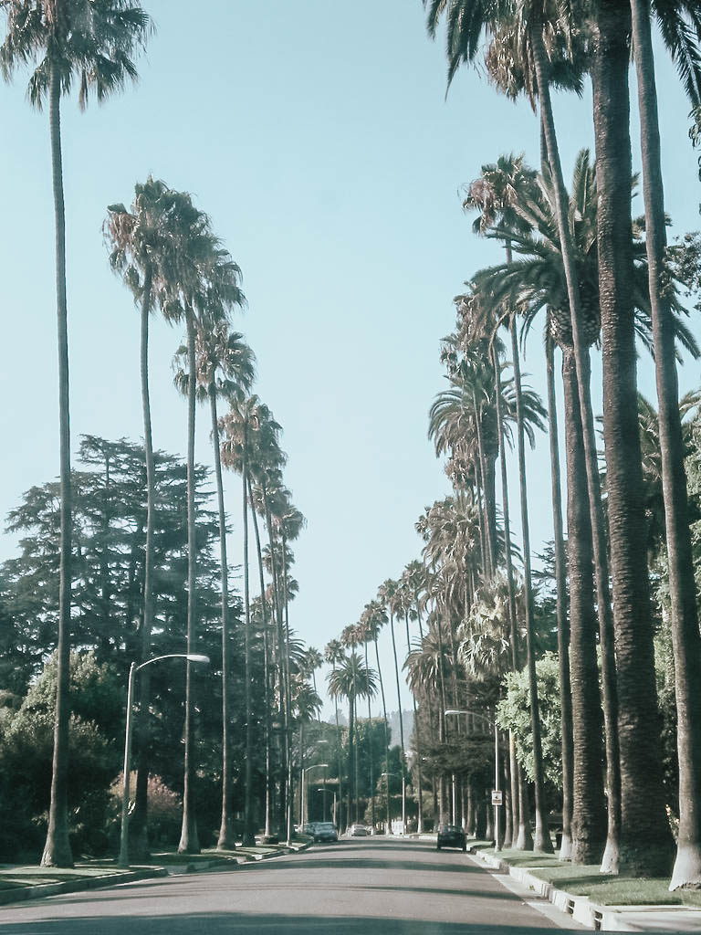 Iconic Palm Trees Beverly Hills