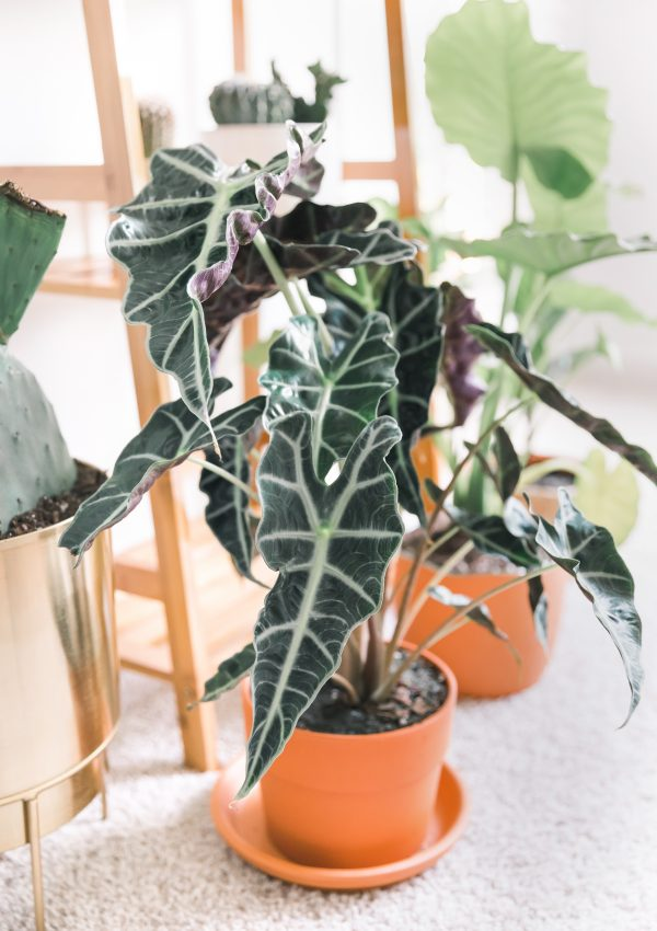6 Tips for Purchasing Plants (And How to Keep Indoor Plants Alive!)