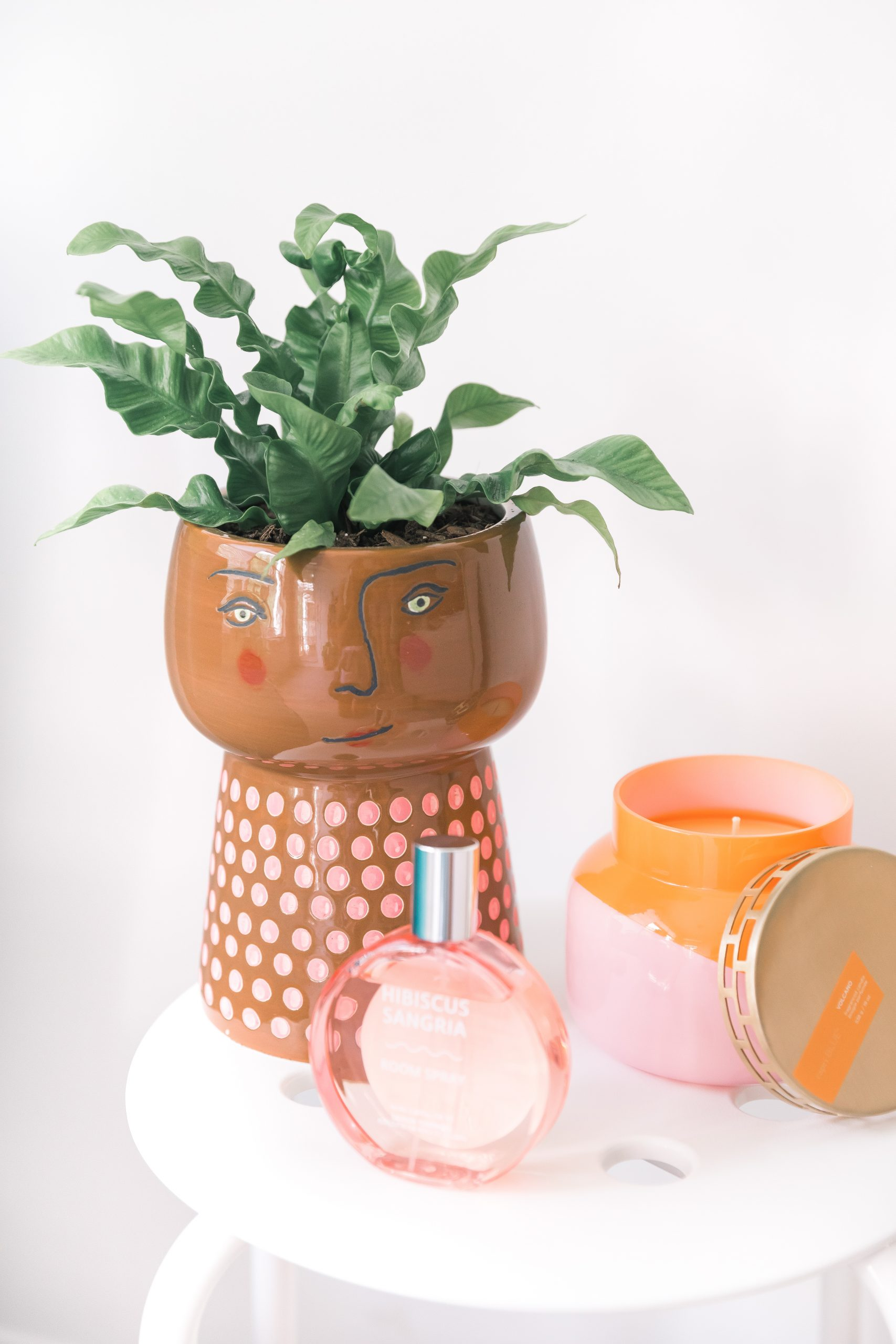 curly plant and planter